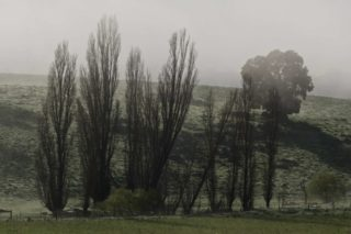 A  photograph by Philip Bell depicting Landscape with main colour being Grey and Olive and titled Poplars Morning