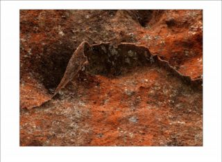 A  photograph by Philip Bell and titled Red Lichen IV