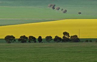 A  photograph by Philip Bell depicting Landscape Farmland with main colour being Green and titled Mungosky