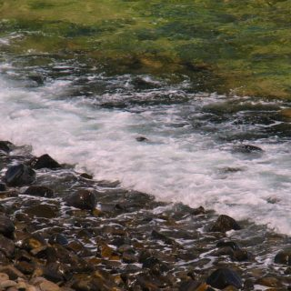 A  photograph by Philip Bell depicting River Water with main colour being Grey and Olive and titled Shore 1