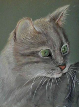 A Pastel artwork by Tracey L Dawes in the Realist Impressionist style  depicting Animals with main colour being Cream Grey and Olive and titled Patches