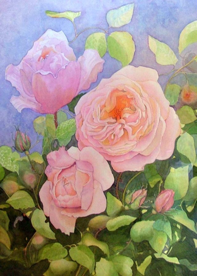 Watercolour Painting by Glenys Gaston titled Constance Spry Roses