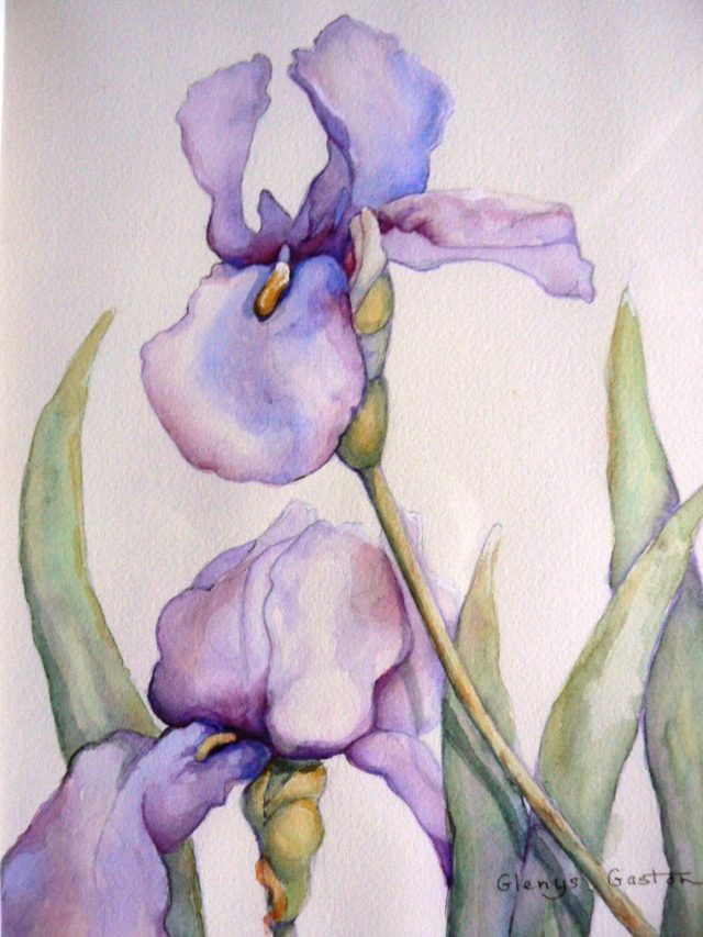 Watercolour Painting by Glenys Gaston titled Irresistible Iris