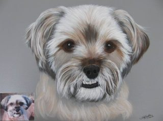 An Acrylic painting by Jan Singleton in the Realist style  depicting Animals and Dogs with main colour being Black Brown and Cream and titled Bernie