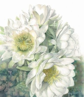 A Watercolour artwork by Nola Sindel in the Realist style  depicting Flowers with main colour being Cream and White and titled White Cactus