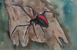 A Watercolour painting by Marion Hughes Animals with main colour being Black Blue and Brown and titled Red back