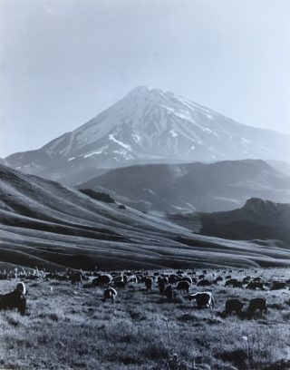 A  photograph by Alireza Shirkhani depicting Portrait Animals Mountains and Snow with main colour being Black Grey and White and titled Damavand Mountain