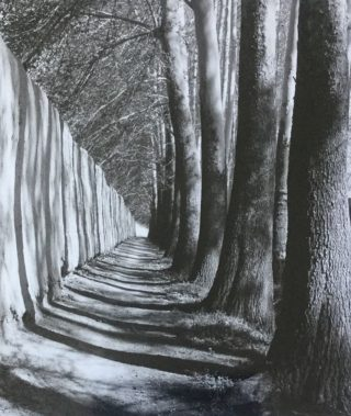 A  photograph by Alireza Shirkhani depicting Landscape Trees with main colour being Black Grey and White and titled Shadows on Wall