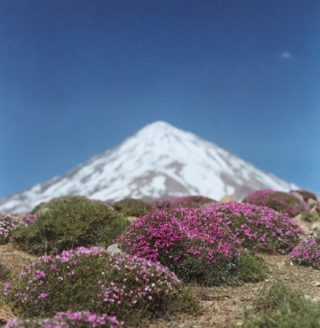 A  photograph by Alireza Shirkhani depicting Landscape Flowers Mountains and Snow with main colour being Black Brown and Green and titled Midsummer In Damavand