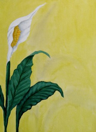 An Acrylic painting by Julie-Anne Gatehouse in the Contemporary Realist style  depicting Flowers with main colour being Green White and Yellow and titled Peace Lily on Yellow