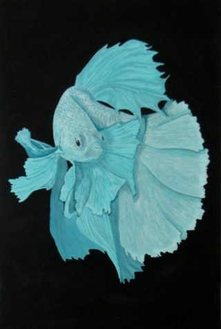 An Acrylic painting by Julie-Anne Gatehouse in the Contemporary Realist style  depicting Animals Fish with main colour being Black and Blue and titled Fighting Fish