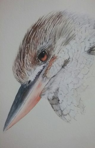 A Watercolour painting by Marion Hughes depicting Animals Birds and titled Blue Winged Kookaburra Portrait