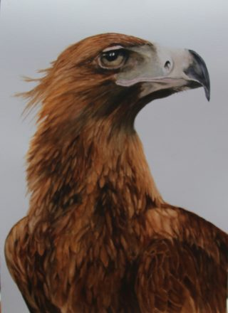 A Watercolour painting by Marion Hughes depicting Animals Birds with main colour being Brown and Grey and titled King Raptor
