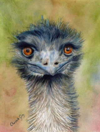 """A Watercolour artwork by Christelle Grey in the Realist style  depicting Animals and Birds with main colour being Blue Green and Grey and titled """"Emusing"""""""