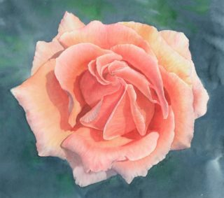 A Watercolour artwork by Nola Sindel in the Realist style  depicting Flowers with main colour being Green and Pink and titled Rosa, Just Joey