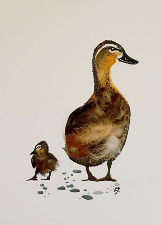 A Mixed Media painting by Christine Sinclair in the Illustrative style  depicting Animals Birds with main colour being Black Brown and Cream and titled Mother Duck