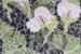 LE 36 - Mosaic - Arum Lilies by Lyn Ellis