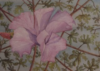 A Watercolour artwork by Les Mortimer depicting Flowers with main colour being Grey Olive and Pink and titled Sunrise Pacific Islands