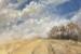 Helen-Paulucci-Yellow Fields-OzArt Finder