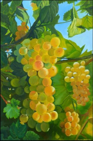 An Oil painting by Lindsay Kilminster in the Contemporary Realist style  depicting Fruit Farmland and Food with main colour being Blue Brown and Green and titled White Wine Grapes