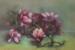 Lyn Ellis-59-Magnolias-OzArt Finder