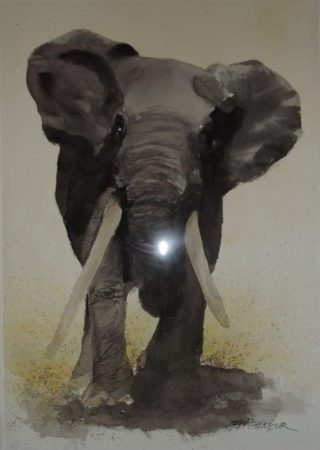 A Watercolour artwork by Jeff Gilmour in the Realist style  depicting Animals with main colour being Grey and titled Elephant