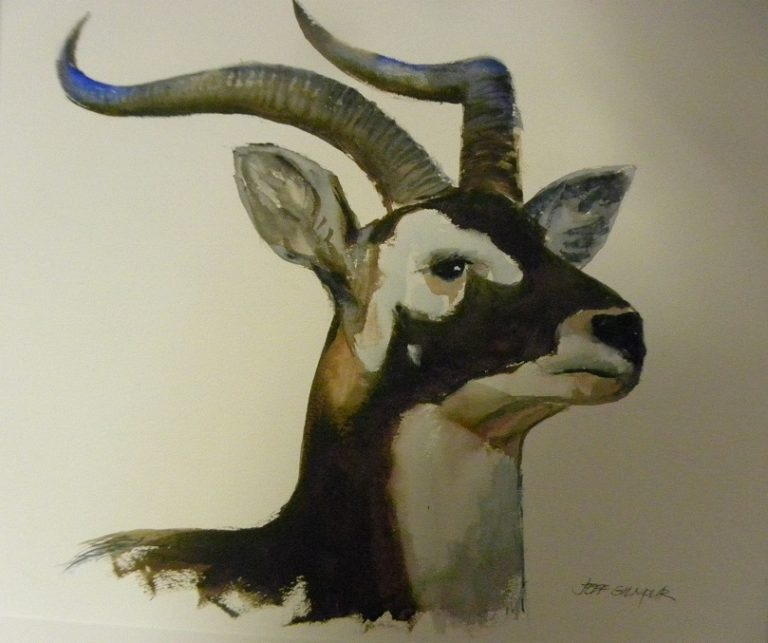 Watercolour Painting by Jeff Gilmour titled Black Buck Antelope