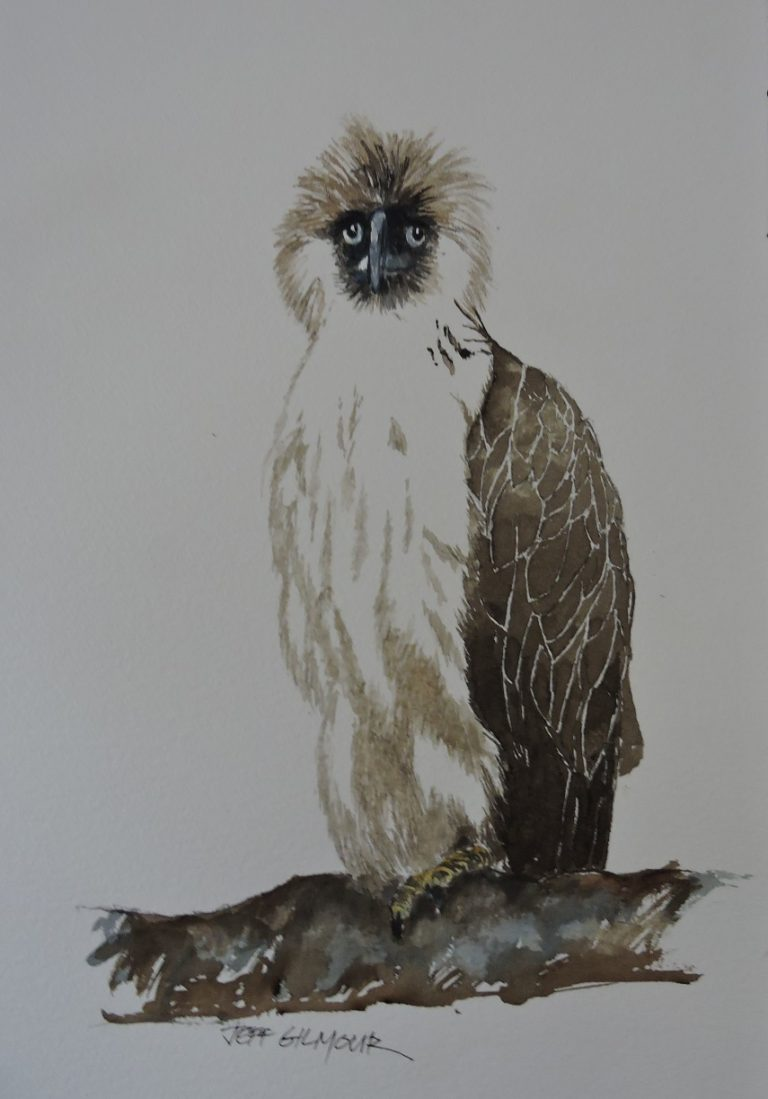 Watercolour Painting by Jeff Gilmour titled Philippines Eagle