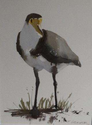 A Watercolour artwork by Jeff Gilmour depicting Animals Birds and titled Plover