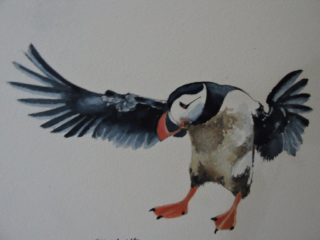 A Watercolour artwork by Jeff Gilmour depicting Animals Birds and titled Puffin Landing