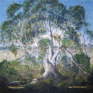 An Acrylic painting by Rex Woodmore in the Contemporary Realist style  depicting Landscape Bush Lake and Outback with main colour being Blue Green and Grey and titled Real Rivergum