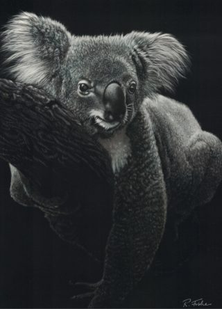 A Scratchboard painting by Rikki Fisher in the Realist style  depicting  Animals with main colour being Grey and titled Hanging About