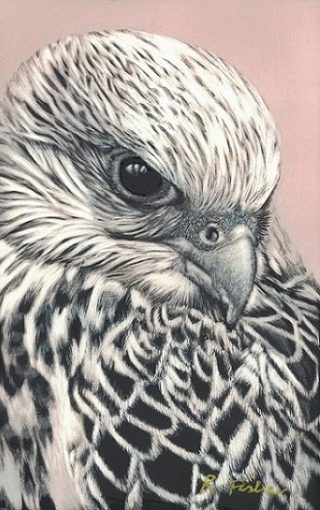 A Scratchboard painting by Rikki Fisher in the Realist style  depicting Animals Birds with main colour being Grey and Pink and titled Gyr falcon