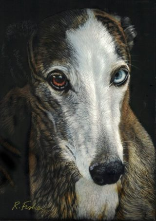A Scratchboard painting by Rikki Fisher in the Realist style  depicting  Animals with main colour being Black Brown and Grey and titled Nelson Whippet