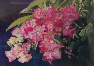 A Pastel painting by Maureen Bainbridge in the Realist style  depicting Flowers with main colour being Black and Pink and titled Sharing the Morning Light