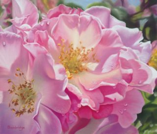 A Pastel painting by Maureen Bainbridge in the Realist style  depicting Flowers with main colour being Pink and titled Morning Light