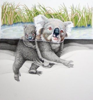 A Coloured Pencils painting by Janet Matthews in the Realist style  depicting Animals and titled Hold on Baby