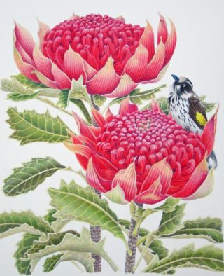 A Coloured Pencils painting by Janet Matthews in the Realist style  depicting Flowers Birds and titled Maybe that one's jucier