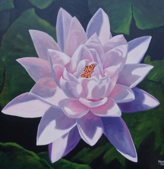 An Oil painting by Moyra Le Blanc Smith in the Realist style  depicting Flowers with main colour being Black Green and Pink and titled Pink Waterlily
