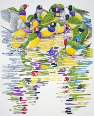 A Coloured Pencils painting by Janet Matthews in the Realist style  depicting Animals Birds with main colour being Green Grey and Purple and titled Gouldian Finches - It's a Bath Party