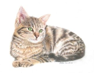 A Coloured Pencils painting by Nola Sindel in the Realist style  depicting Animals Cats with main colour being Brown Cream and Ochre and titled Puss