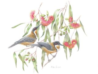 A Watercolour artwork by Nola Sindel in the Realist style  depicting Flowers Birds with main colour being Green Grey and Red and titled Honey Fix