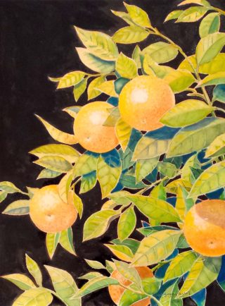 A Watercolour artwork by Gregory Pastoll in the Contemporary Realist style  depicting Fruit with main colour being Black Green and Orange and titled Mandarins