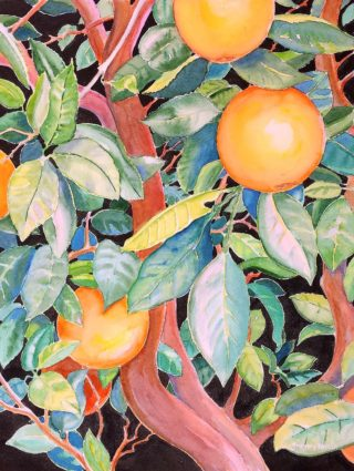 A Watercolour artwork by Gregory Pastoll in the Contemporary Realist style  depicting Fruit with main colour being Black Brown and Green and titled Oranges
