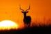 Toula Cassen-1-Antelope Sunset-OzArt Finder