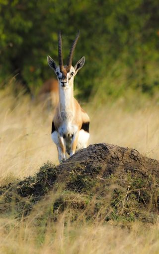 A  photograph by Toula Cassen depicting Animals and titled Oryx; strike a pose
