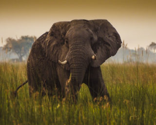 A  photograph by Toula Cassen depicting Animals and titled Elephant in marshland