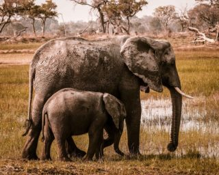 A  photograph by Toula Cassen depicting Animals and titled Mother and child