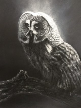 A Pastel artwork by Ainsley McPherson in the Realist style  depicting Animals Birds with main colour being Grey and titled Moonlight Owl