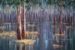 86 Flooded Forest Barmah red size